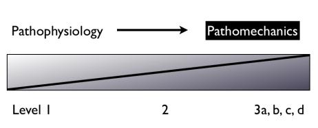 Figure 11.  Traitement de la pathophysiologie aux premiers niveaux (irritatifs). Traitement du dysfonctionnement mécanique vers les niveaux plus avancés (2 et 3) lorsque le tissu neural peut tolérer les sollicitations mécaniques. (Shacklock 2005b).DR