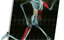 SMARTERehab. Niveau 2. membres supérieurs. membres inférieurs. La marche, le bassin et la sacro-iliaque (9 jours)